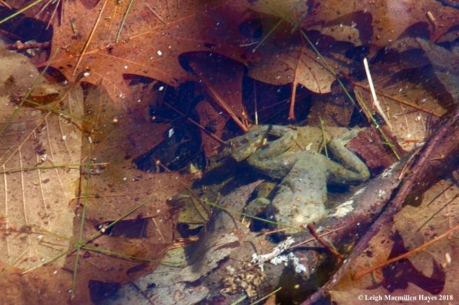 e5-dead frog