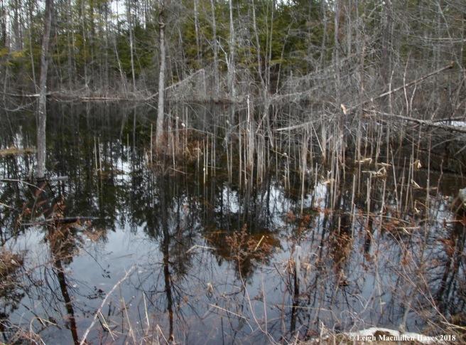 f15-wetland