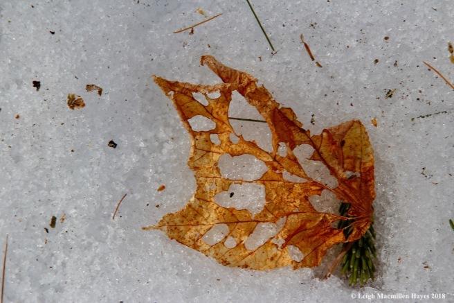 m14-holy leaf