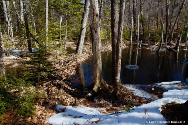m3-beaver dam inactive