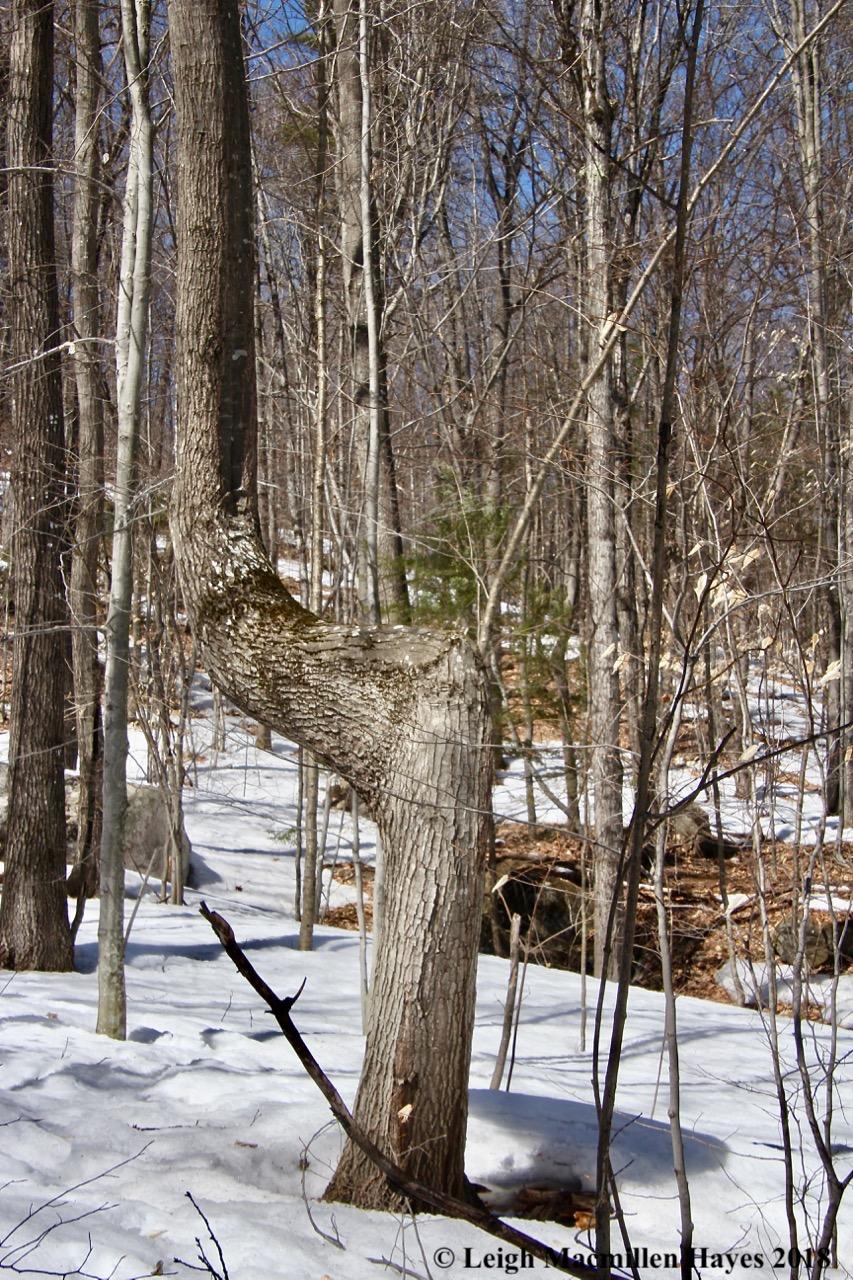 m4-elbow tree