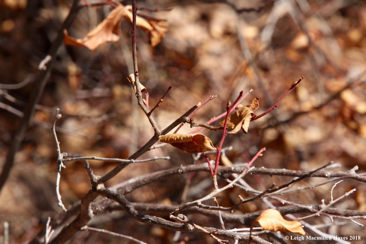 m9-blueberry bushes