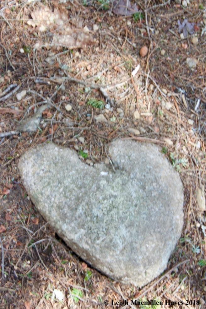 o17-heart