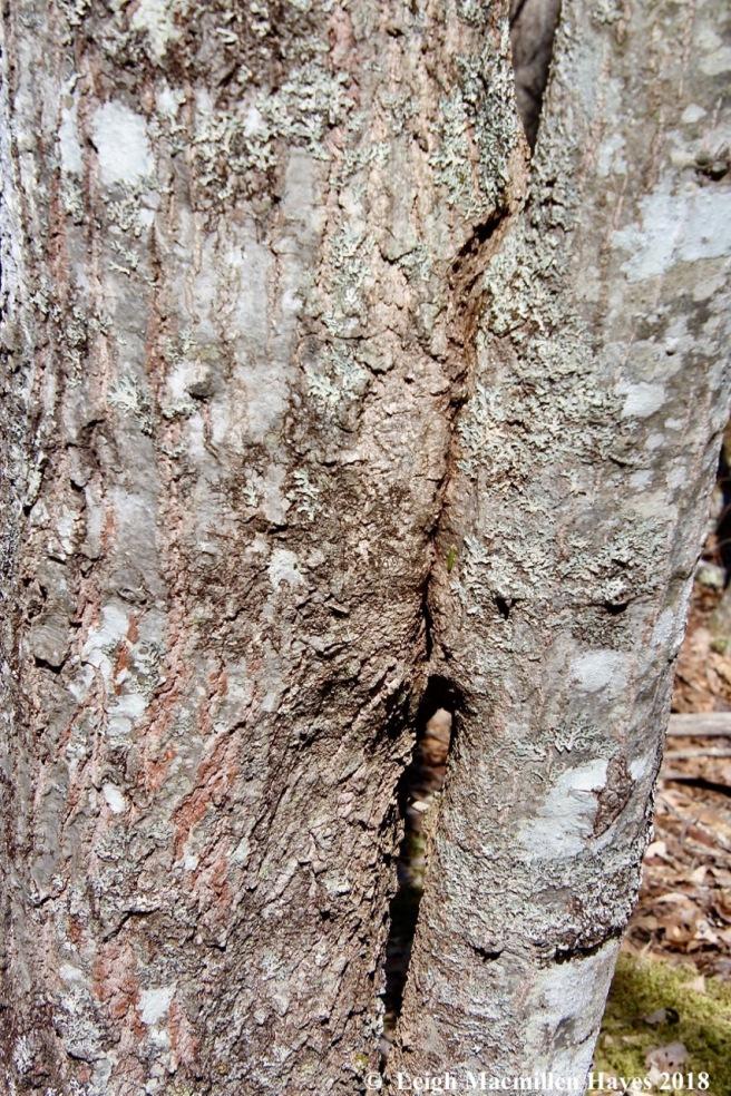 o17-kissing tree