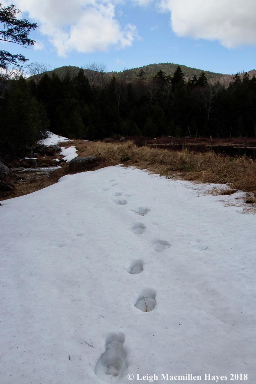 p10-moose tracks