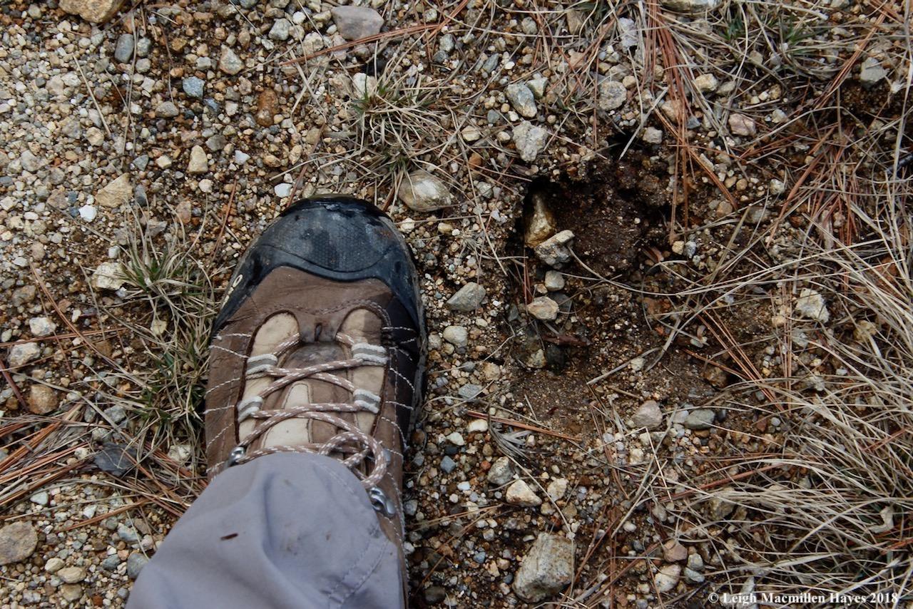 p11-moose tracks