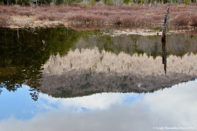 p13-Mount Shaw reflection