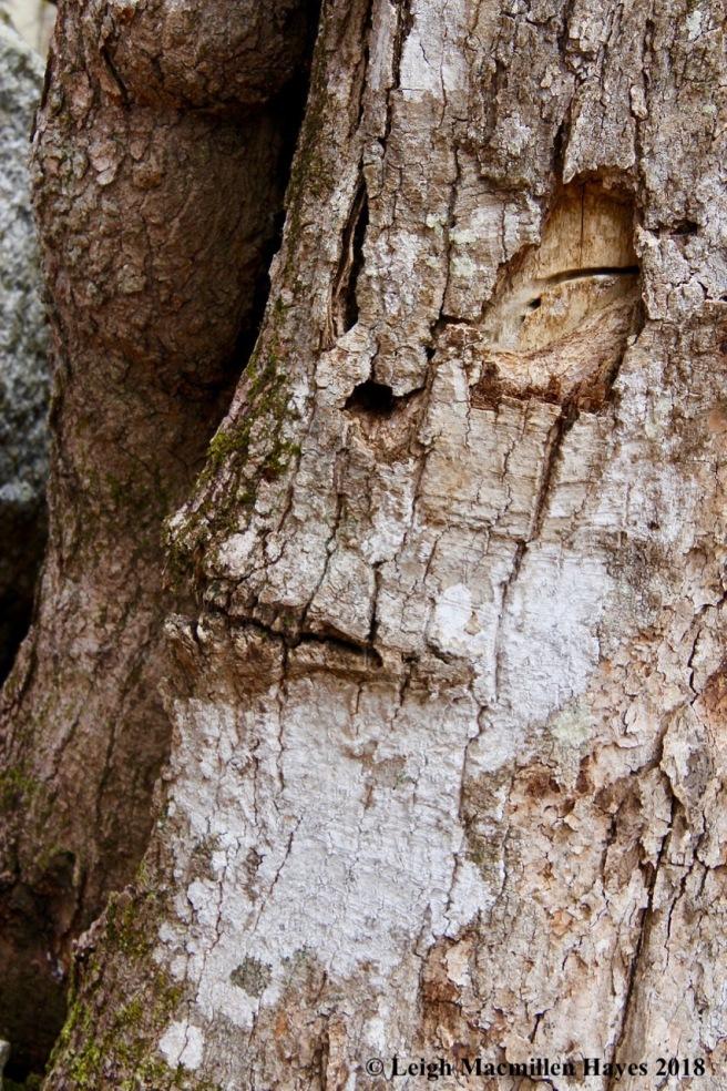 p4-tree spirit