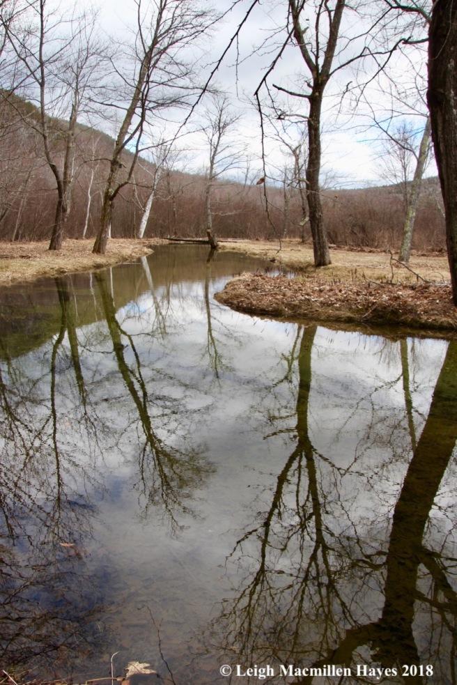 s17-rattlesnake brook