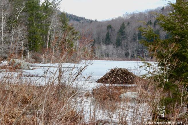 s24-beaver lodge