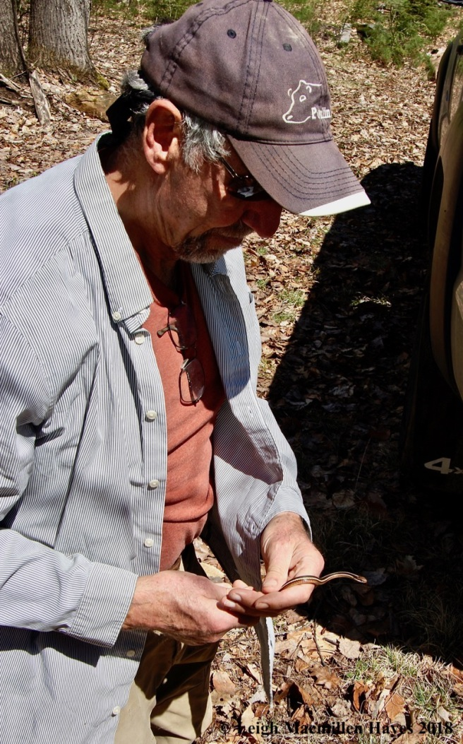 m12-ribbon snake captured