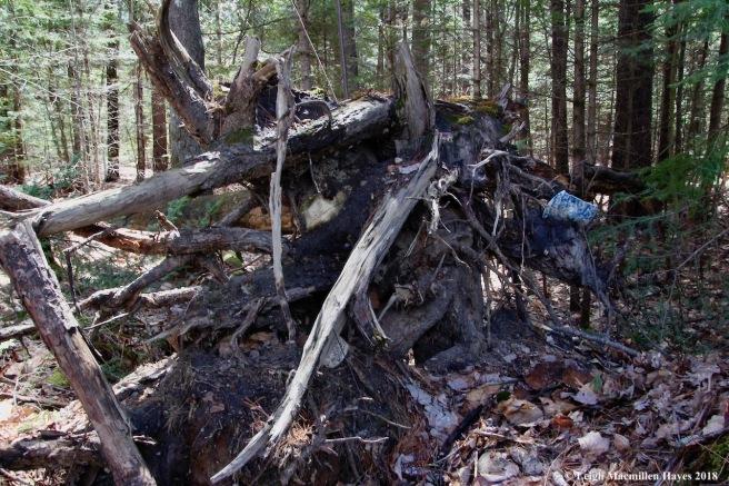 m16-root art