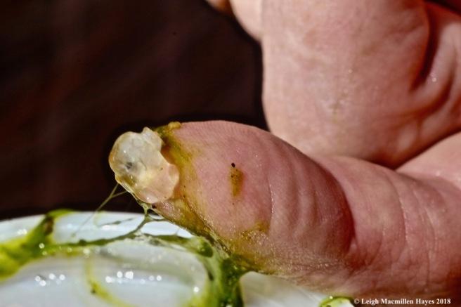 m5-blob and algae