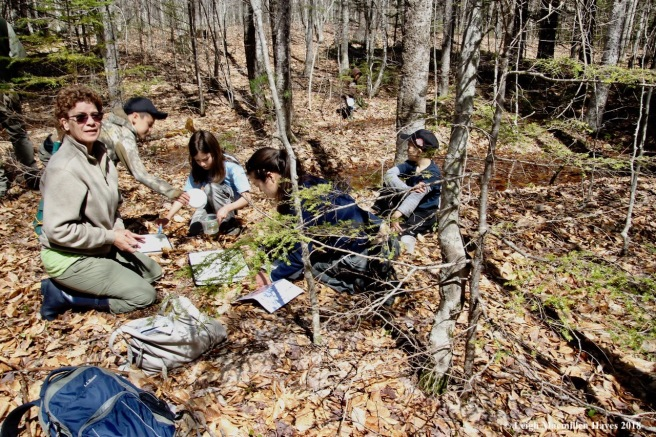 m7-examining species