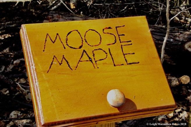 s2-moose wood