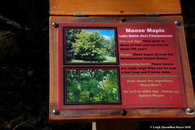 s2a-moose maple