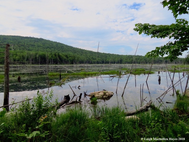 d1-approaching the bog