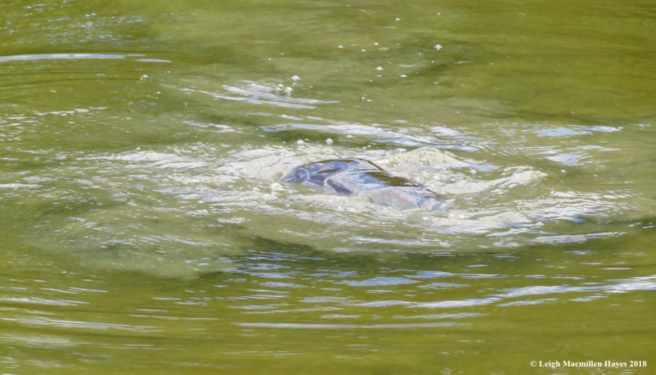 e27-turtle wars