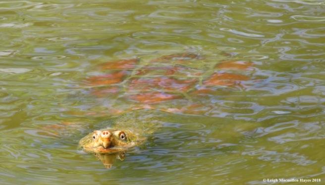 e28-turtle face