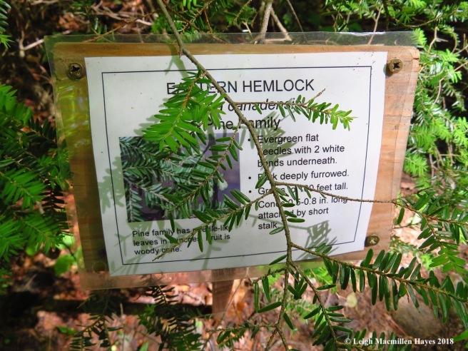 s13-hemlock