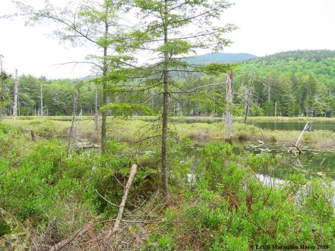 s14-Shingle Pond