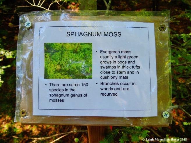 s14-sphagnum moss