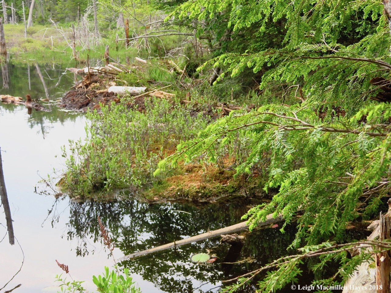 s19a-beaver dam