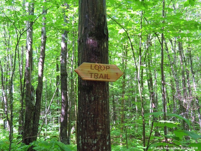 s6-Brent's Loop Trail Sign