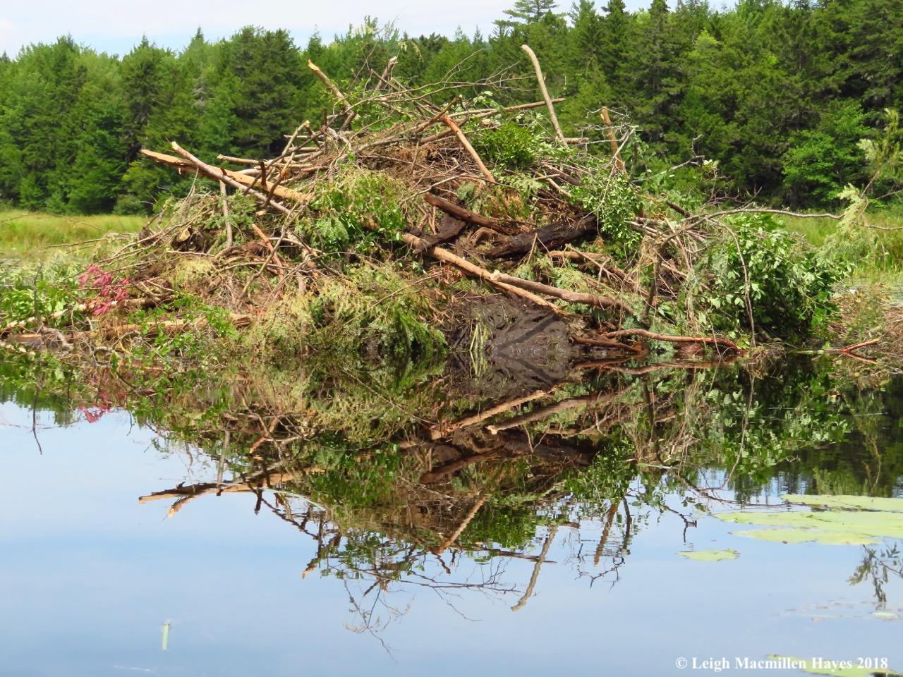 16-beaver lodge
