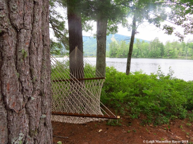 c20-hammock