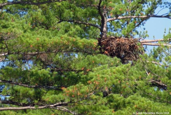 l6-eagle nest