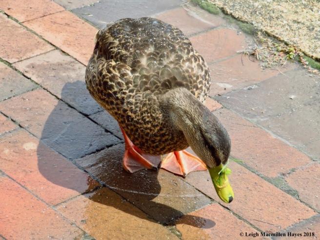 w9-meeting Daffy
