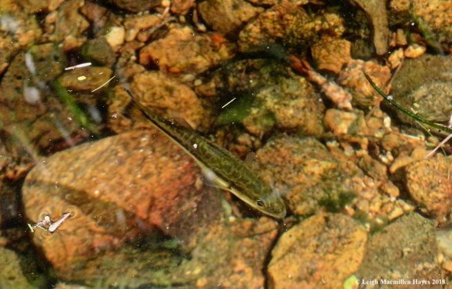 13-baitfish