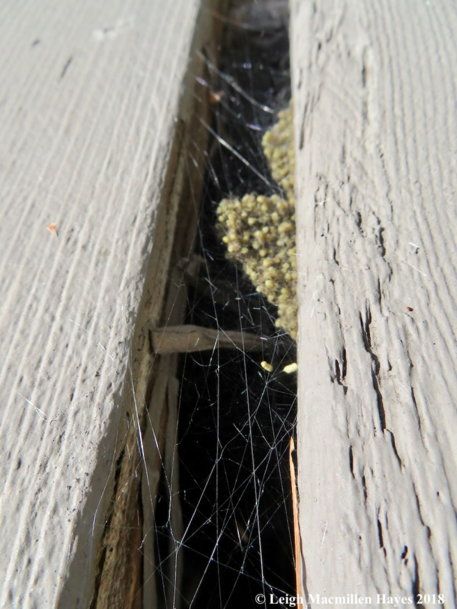 13-spider nursery