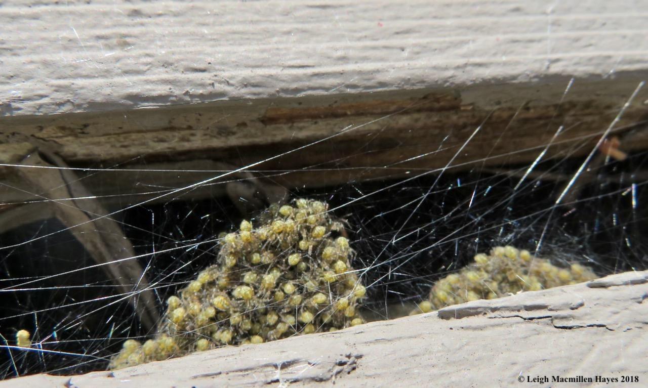 14-spider nursery