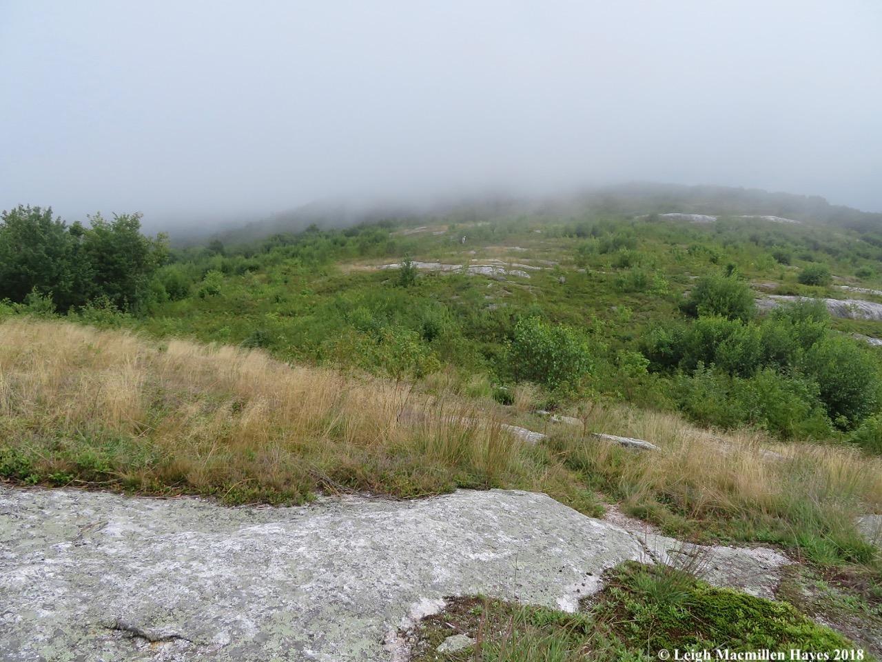19-fog danced across ridge