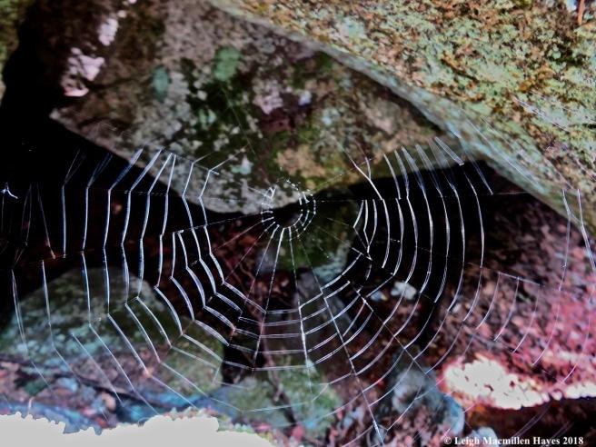 6-spider web
