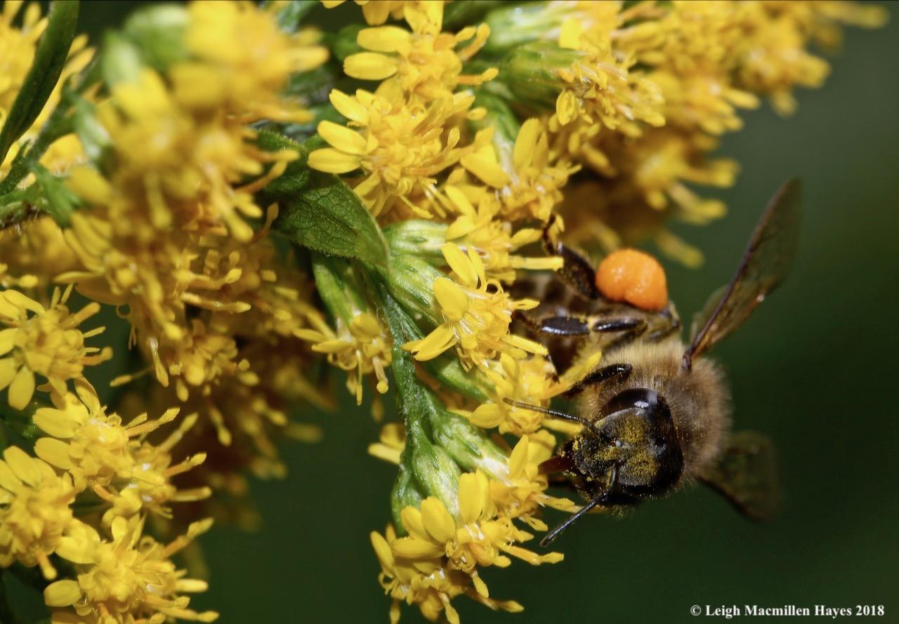 10-pollen all over body
