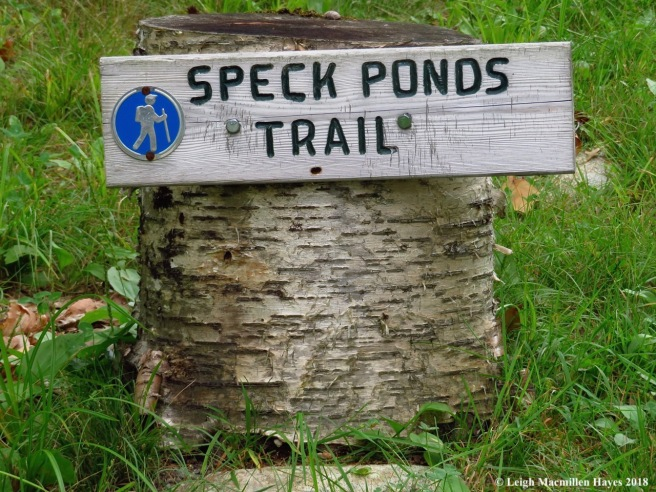 10-Speck Ponds Trail