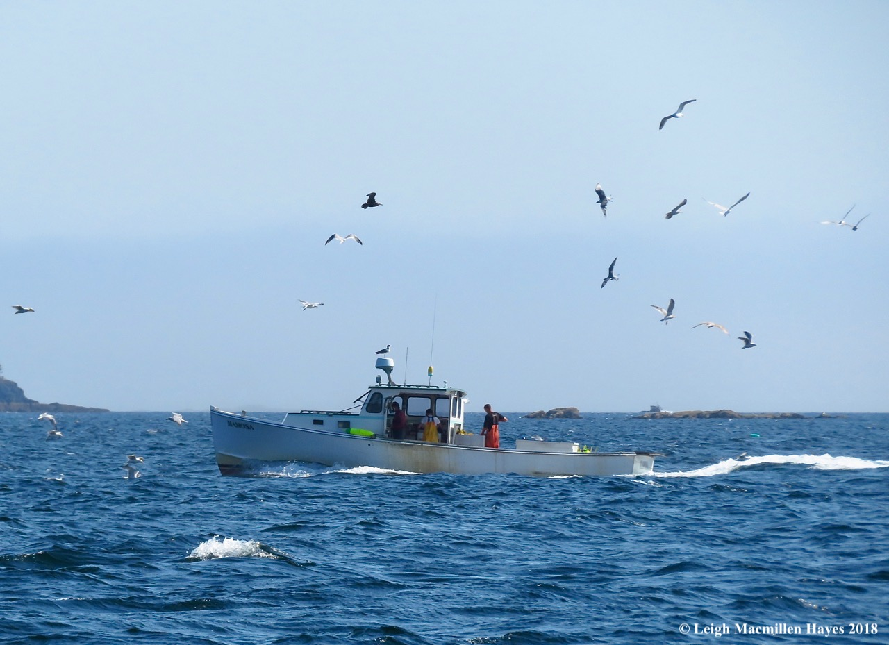 11-Lobster Boat surrounded by gulls