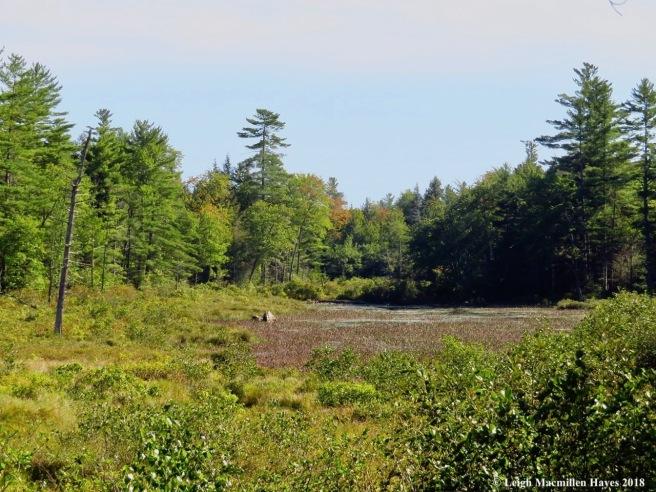 12-Moose Pond Bog
