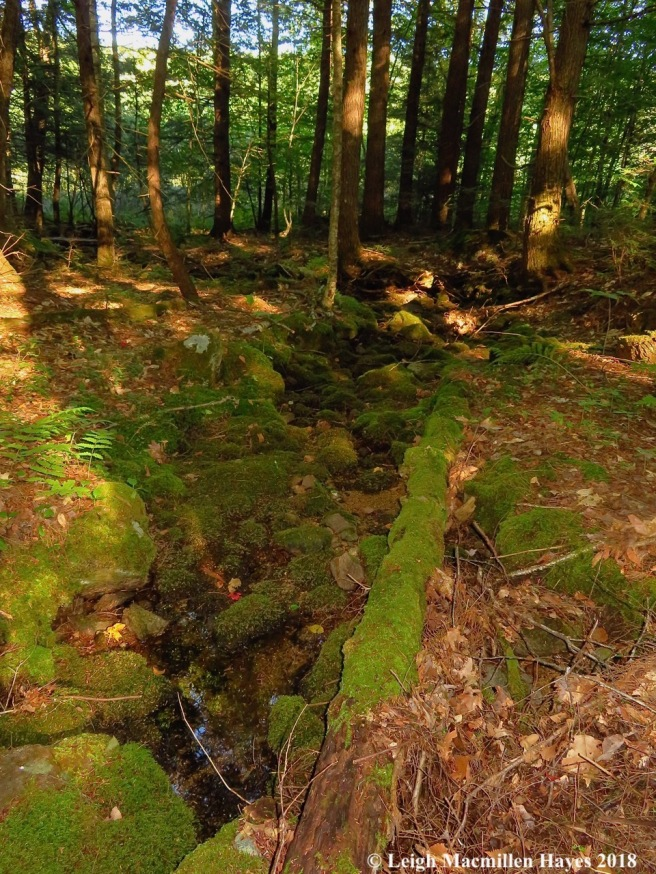 16-dry stream bed