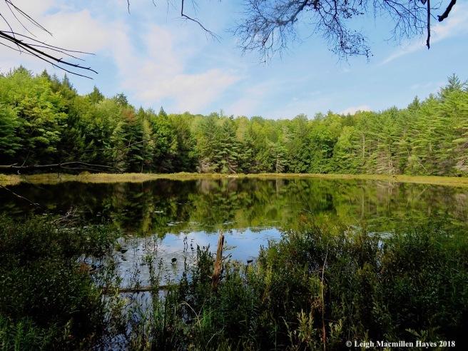 16-Lower Speck Pond