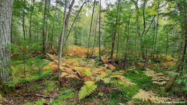 18-Sweden forest