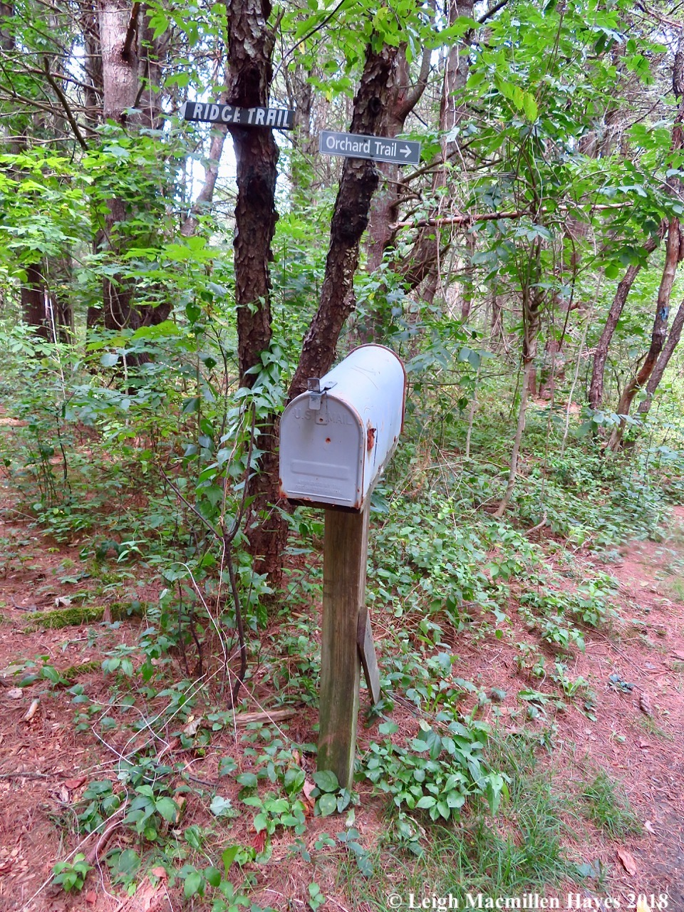 2-mailbox in the woods