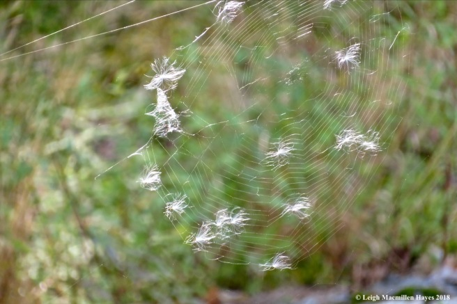21-seeds caught in web