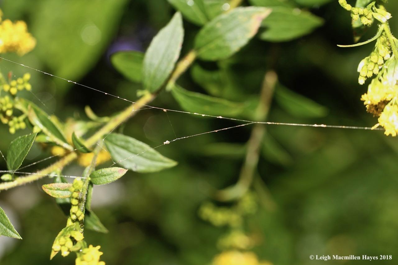 25-spider web