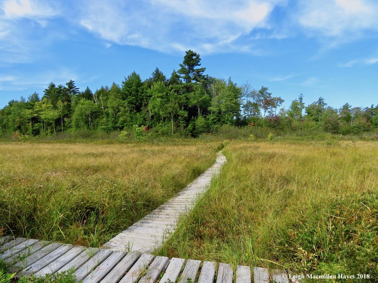 30-Holt Pond Quaking Bog