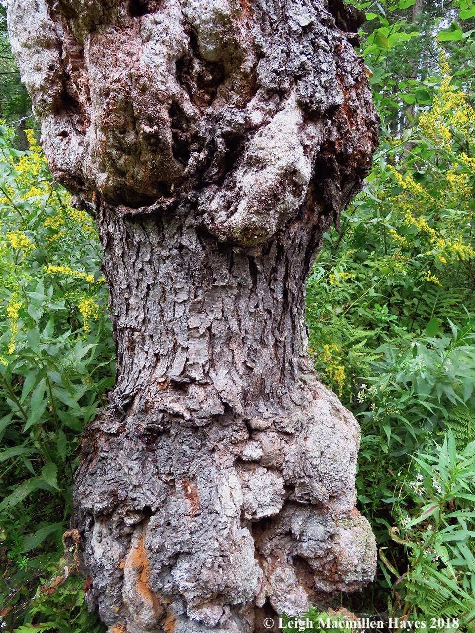 34-tree spirits