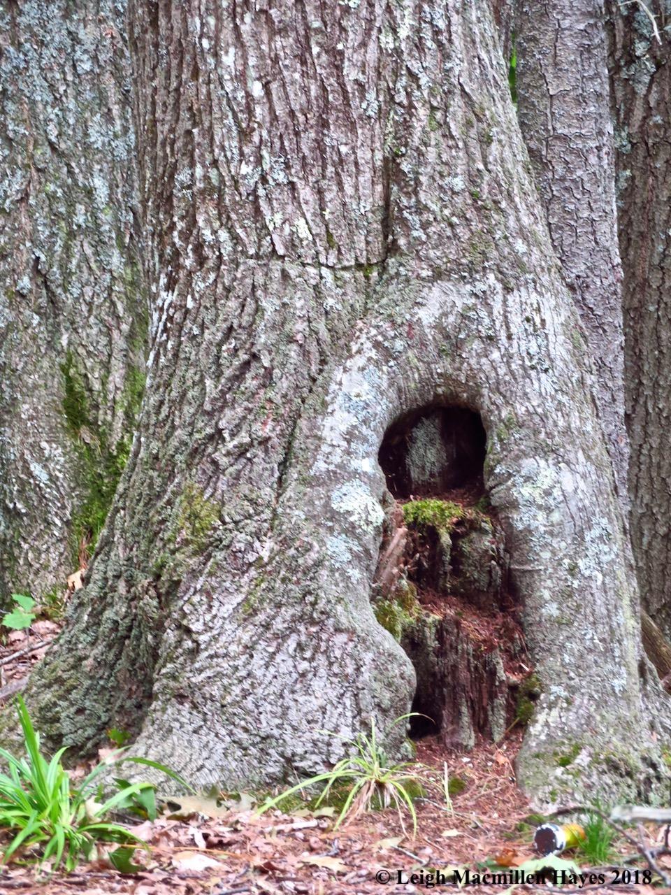35-tree gnomes